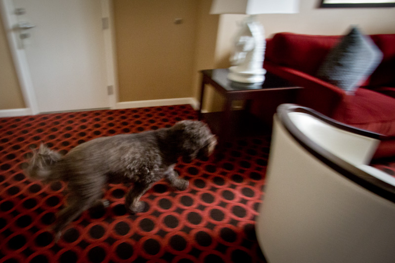 Hotel Monaco • Dog friendly hotels in Salt Lake City
